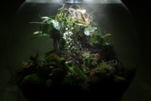 The Madagascar BiOrbAir Terrarium (part fourteen)
