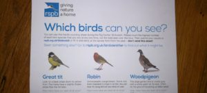 My RSPB Big Garden Birdwatch 2019
