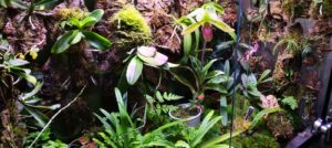 An update on the Paphiopedilum and Phalaenopsis orchids inside my Rainforest Terrarium