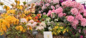 Millais Nurseries Celebrate Exbury Gardens, at the RHS Chelsea Flower Show 2019