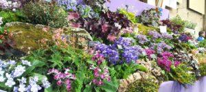 A 2020 Calendar of Specialist Orchid, Cactus, & Houseplant Plant Fairs, Sales, & Swaps
