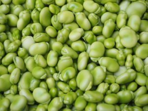 Getting the best results from your compost and growing broad beans