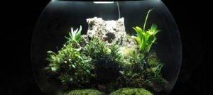 BiOrbAir Review – Growing Miniature Orchids in the BiOrbAir (part twenty-three)