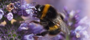 Brilliant plants for bees and butterflies!