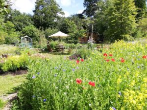 Space2grow: community gardening in Farnham, Surrey