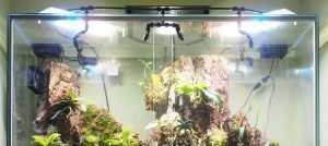 An update on the LED Lights, Misting Unit, & Equipment inside my Tall Orchidarium
