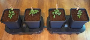 The Quadgrow Self Watering Planter