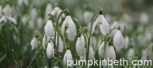 A Calendar of Special Snowdrop Garden Openings, Talks, Events & Open Days for 2021