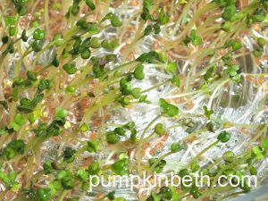 Grow Microgreens: Quick, Easy, & Delicious!