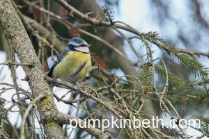 Sharing the excitement of having Blue Tits nesting in our garden!