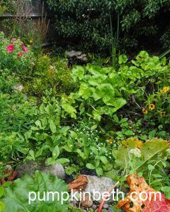 Find out what's Flowering in & around my Wildlife Pond in October!
